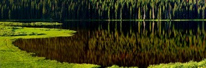 PINEY REFLECTIONS